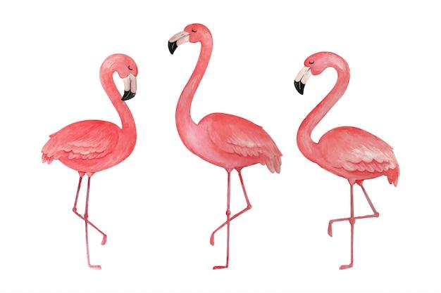 手描きのフラミンゴの水彩熱帯鳥セット。