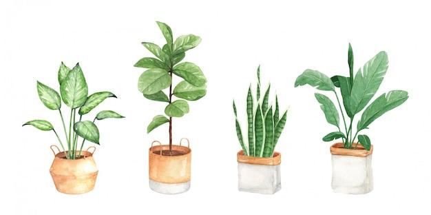 水彩都市植物イラスト、手描き