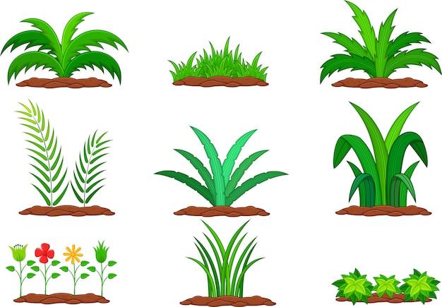 白い背景に緑の植物のセット