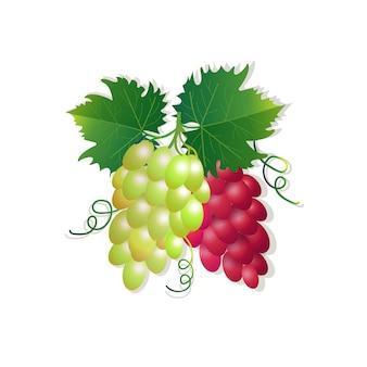 Виноград на белом фоне, здоровый образ жизни или концепция диеты, логотип для свежих фруктов