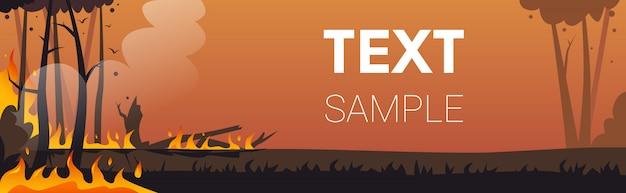 危険な山火事ブッシュ火災開発乾燥した木燃える木地球温暖化自然災害生態学問題コンセプト強烈なオレンジ色の炎水平