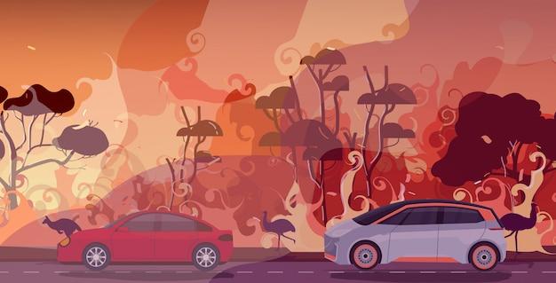 Автомобили и животные, спасающиеся от лесных пожаров в австралии лесной пожар лесной пожар горящие деревья концепция эвакуации стихийных бедствий интенсивное оранжевое пламя горизонтальное
