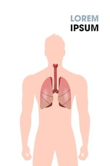 人間の食道気管肺内臓呼吸器系医療ポスター肖像フラット垂直コピースペース