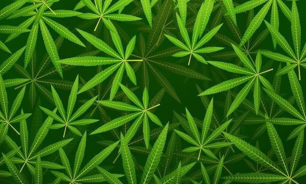 緑の麻の枝大麻マリファナの葉花の背景水平フラット