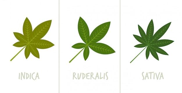 セットサティバインディカルデラリスマリファナの葉薬物消費概念水平フラット