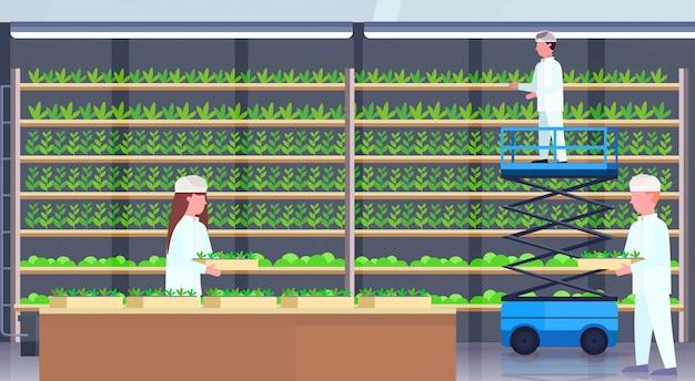 Инженеры земледелия в форме горшечных растений с использованием ножничного подъемника на платформе люди, работающие в современной органической ферме, интерьер, зеленый, горизонтальный, промышленность