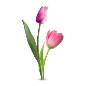 チューリップの花のベクトル