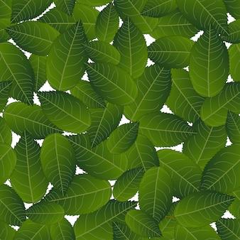 Камелия листья на белом фоне
