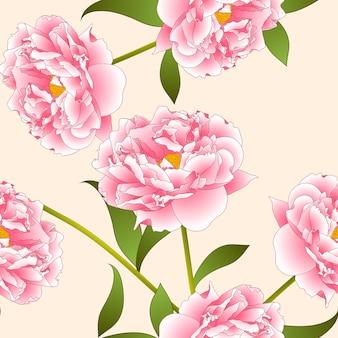 Розовый цветок пиона на фоне бежевой слоновой кости