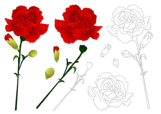 Красный цветок гвоздики