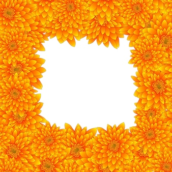 白い背景で隔離された黄色の菊の国境。