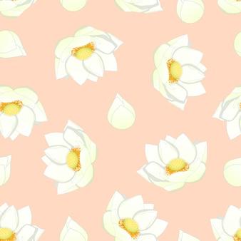 Белый индийский лотос на светло-розовом фоне