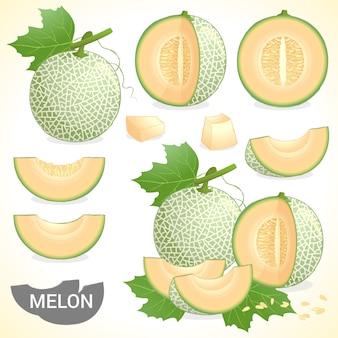 Набор из дыни канталуп фруктов в различных стилях в векторном формате