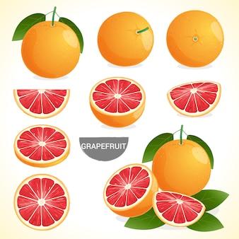 様々なスタイルのベクトル形式の葉とグレープフルーツのセット
