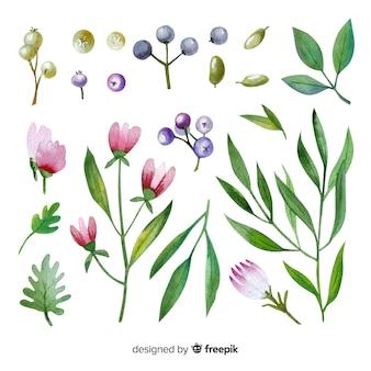 Акварель цветочные ветви коллекции