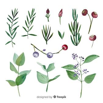 Красочная акварель цветочные ветви коллекции