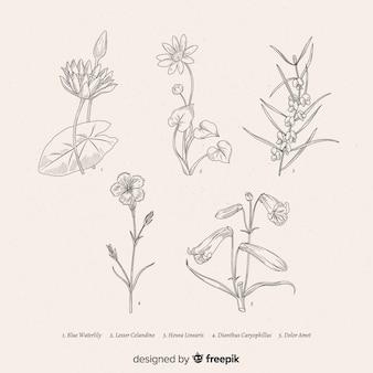 Реалистичные рисованной коллекции ботанических цветов