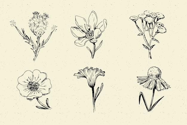 現実的な手描きのヴィンテージ植物の花コレクション