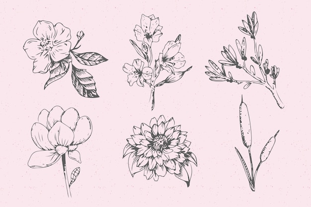 Реалистичная рисованной коллекция старинных ботаники цветов