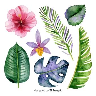 水彩の熱帯の花と葉