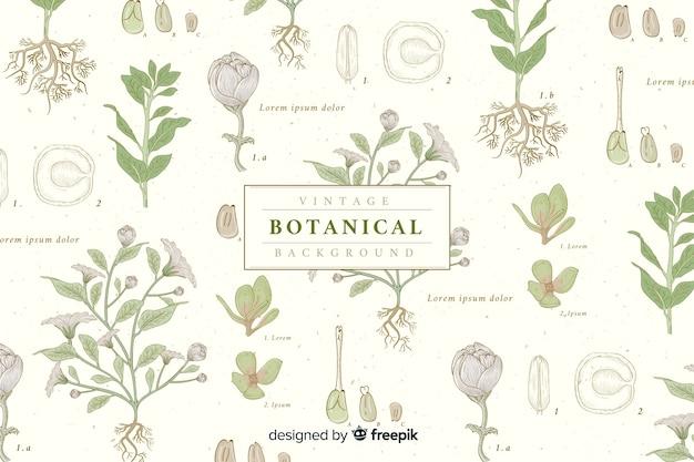 Винтажный ботанический фон