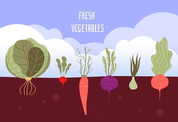 菜園。土壌の背景に根を持つ夏の野菜をガーデニングする有機性で健康的な食品野菜