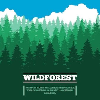 針葉樹の森の野生の風景