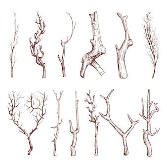 木の小枝をスケッチ