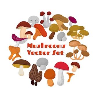 Деликатесы свежие съедобные грибы векторный набор