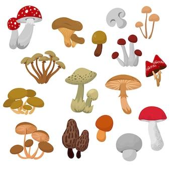 Свежие осенние грибы и поганки мультяшный векторный набор