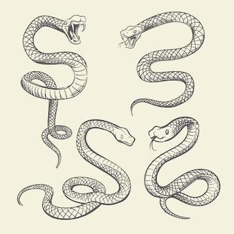 手描きのヘビセット。野生動物のヘビのタトゥーベクターデザインの分離