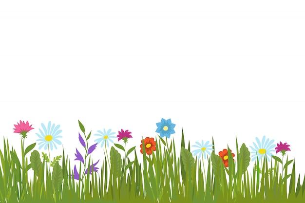 夏の緑の草と花。庭の植物とフィールドハーブの背景
