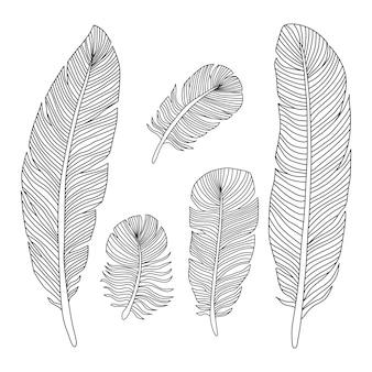 手描きの羽のアウトラインシルエット