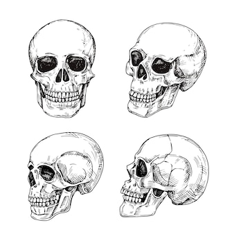 Человеческий череп ручной обращается черепа. эскиз старинный дизайн смерти татуировки изолированы