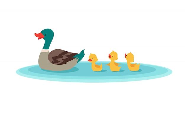 母鴨と水の中の小さなアヒル。行で泳ぐアヒルの子。