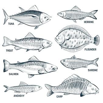 Эскиз рыбы. форель и карп, тунец и сельдь, камбала и анчоус.