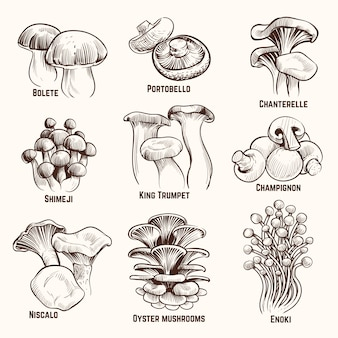 Эскиз грибы. осенние съедобные грибы здоровой пищи старинные гравированные векторные иллюстрации