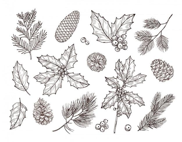 クリスマス植物。モミの枝の松ぼっくりとヒイラギの葉と果実をスケッチします。クリスマス冬植物ヴィンテージ手描きセット