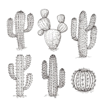 サボテンをスケッチします。手描きの砂漠のサボテン。ビンテージ彫刻西メキシコの植物ベクターセット