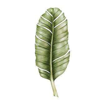 緑の葉の水彩画のイラスト