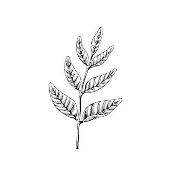 自然に枝を引く葉