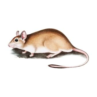 Винтажная животная иллюстрация