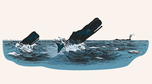 漁船を攻撃している間にマッコウクジラ