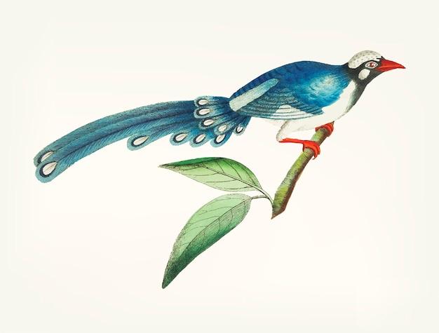 長い尾の青い鳩が描かれた手