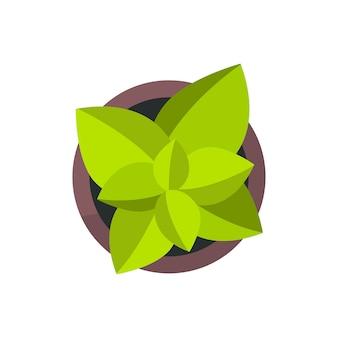家の植物のイラスト
