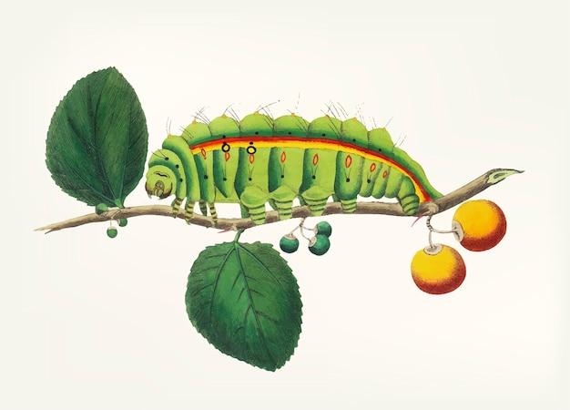 Ручная работа гусеницы