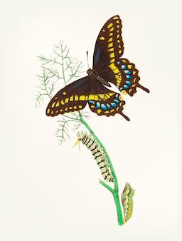 蝶の手描き