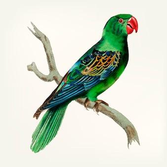 Ручной нарисованный попугай с большим счетом