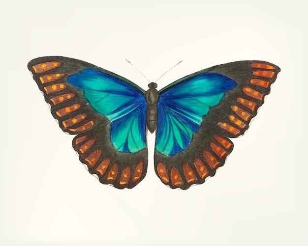 手描きの蝶