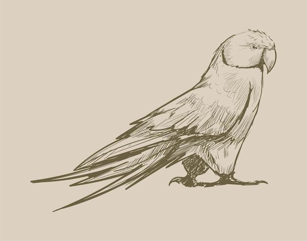オウムのイラストの描画スタイル
